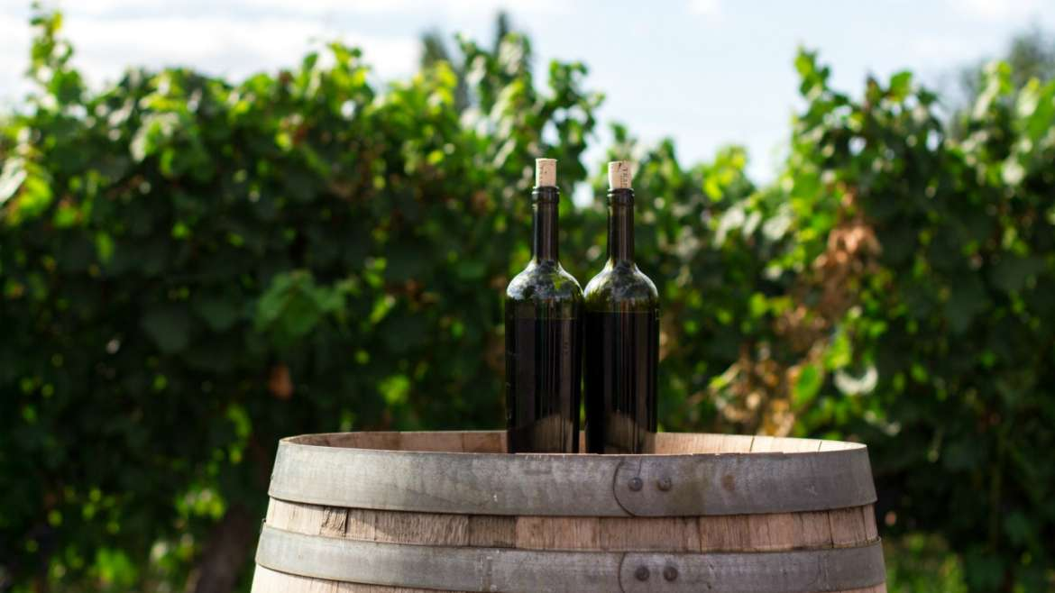 To Store Wine Properly You Need to Know This!