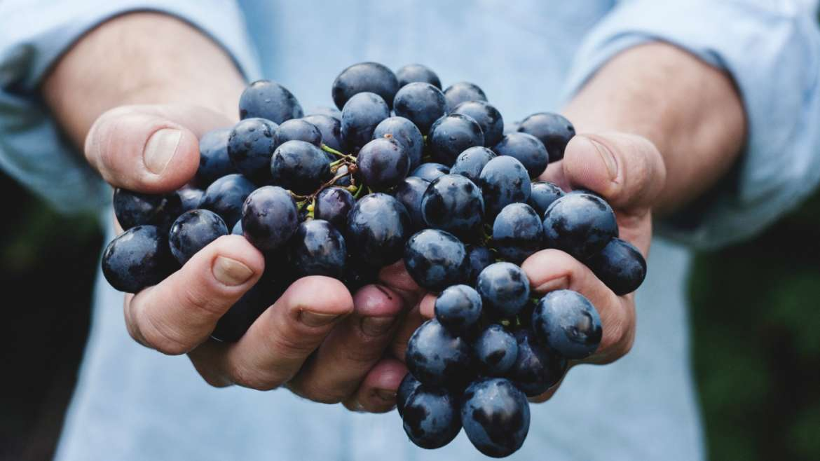 The Art of Winemaking: The Journey From Grape to Wine