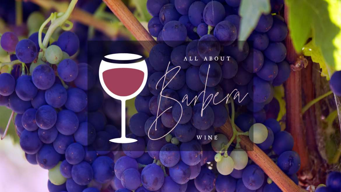 All About Barbera Wine
